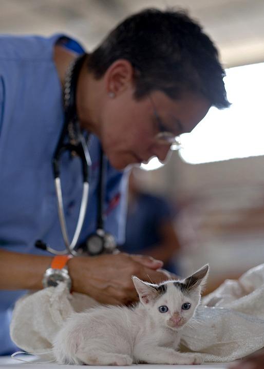 Vous n'avez personne pour soigner correctement vos animaux ? Vite c'est ici !