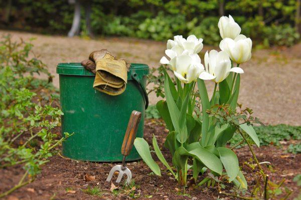 Un professionnel de «devis jardin» pour apprendre à jardiner