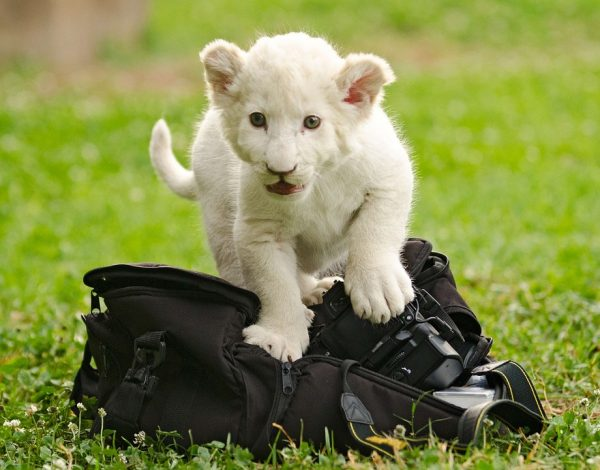 Le sac photo, un accessoire de rangement et sécuritaire de vos différents appareils de photo